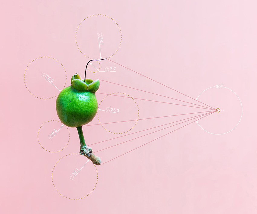 Conceptual Art by Karina Sharpe titled The Immature Fruit