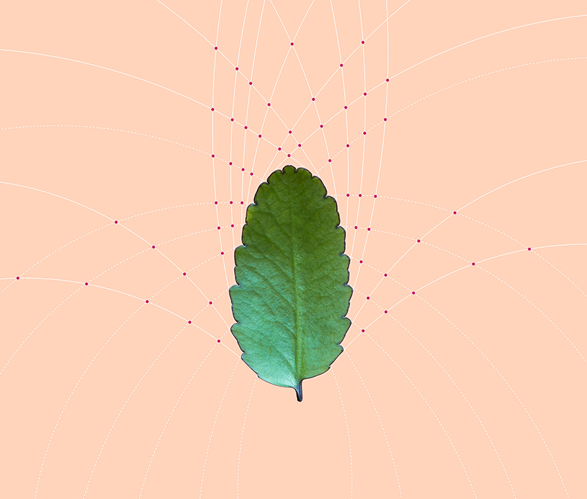 Conceptual Art by Karina Sharpe titled The Leaf of Interconnections