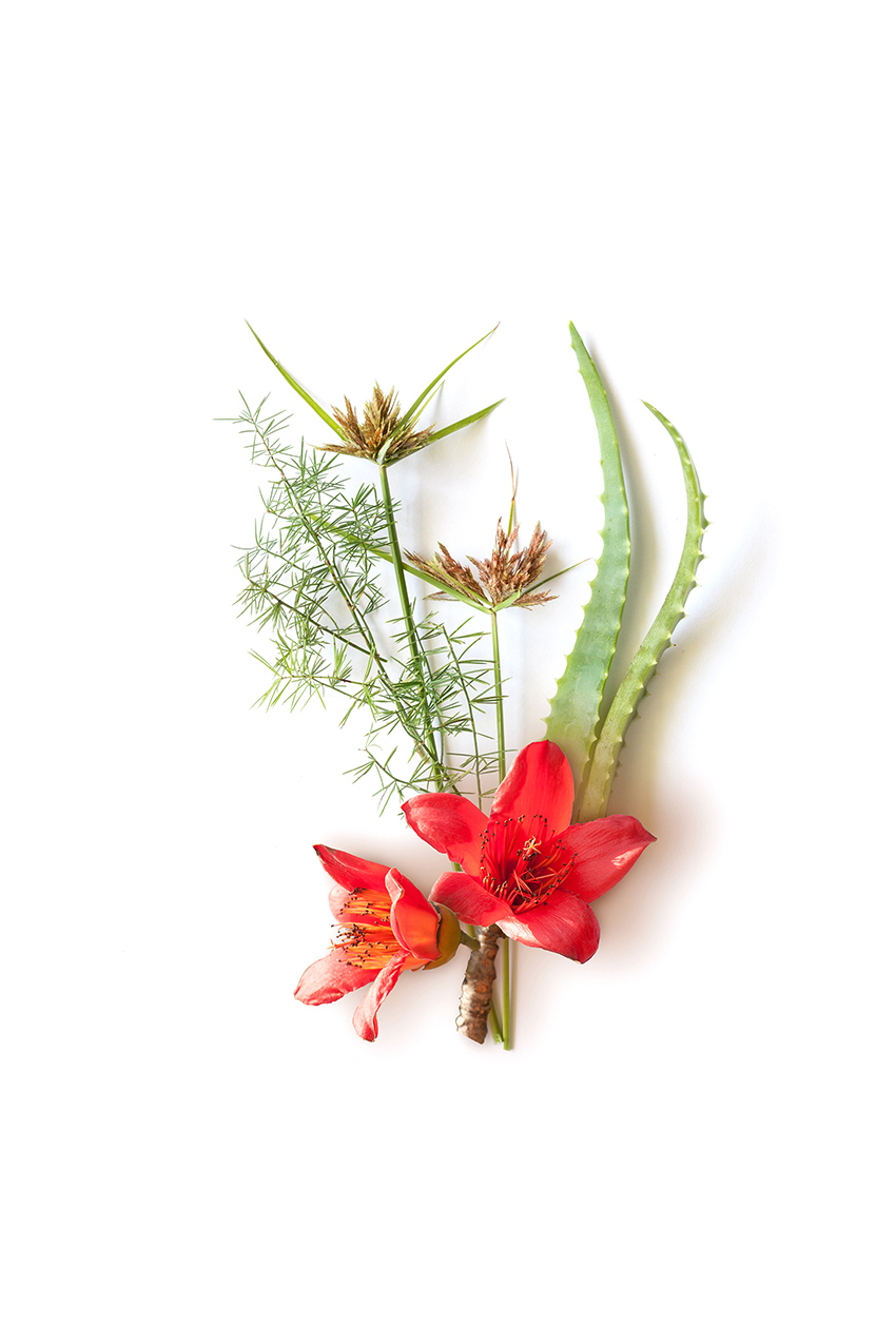 Ingredient Herbal Photography for Packaging for Himalaya by Karina Sharpe
