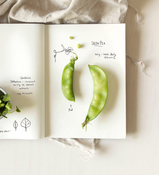 Snow Peas Plant Nutrition Still Life and Illustration by Karina Sharpe