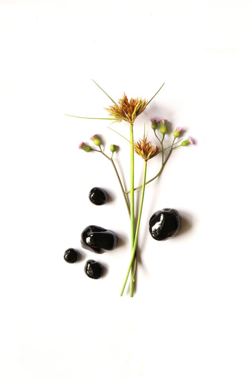 Still life arrangement of medicinal herbs & plants created by Karina Sharpe for Himalaya Herbal