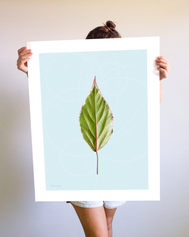 Leaf Curvature Large Print