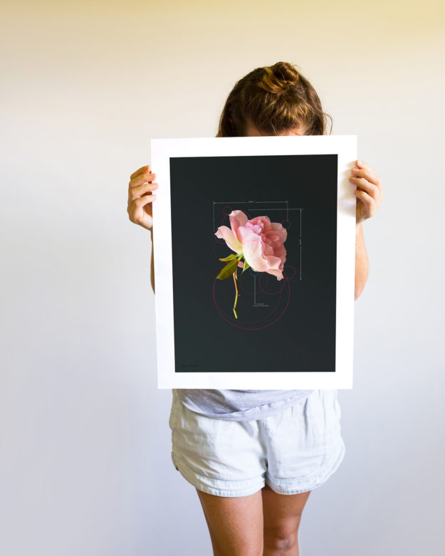 Rose Pink Rose Medium Print