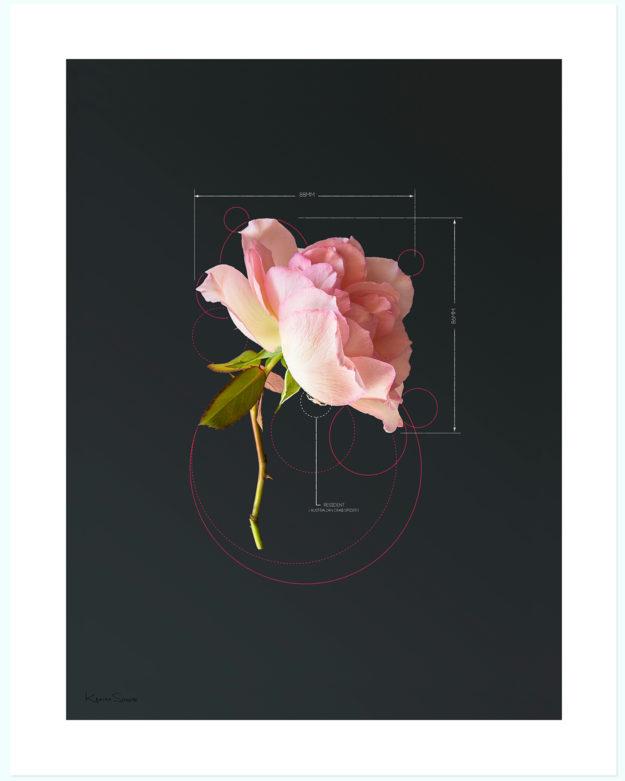 The Rose Pink Rose